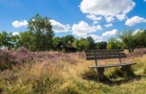 Fahrradtouren oder Wanderungen durch die Lüneburger Heide - ein Highlight wenn sie blüht
