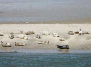 Seehundbänke vor der Insel Baltrum
