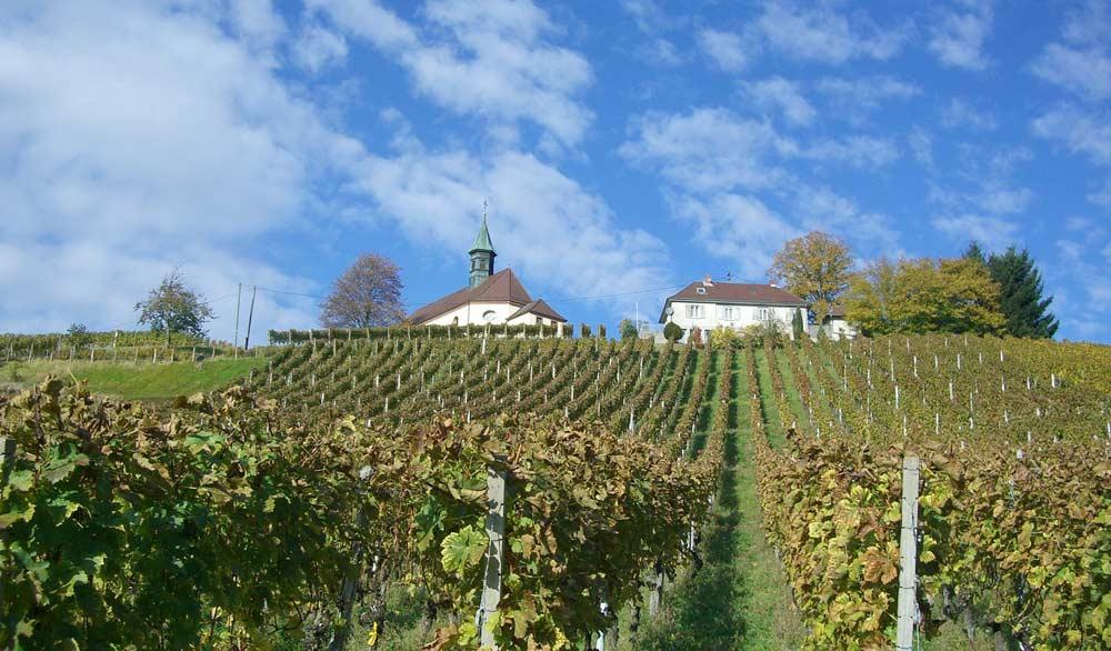 Weinanbau im Schwarzwald bei Gengenbach