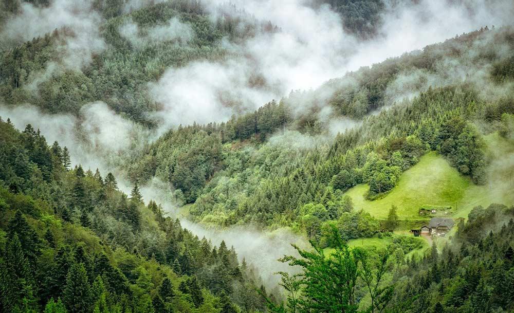 Der Schwarzwald im Nebel